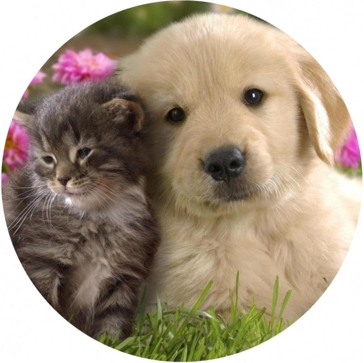 Mačka mačička obrázky